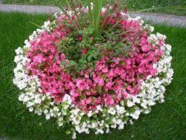 Grabbetreuung Rasen und Blumen