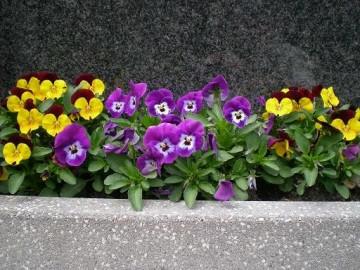 Grabpflege Blumen, bspw. im FJ